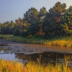 Ранок біля лісового озера.