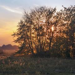 Сонце б'ється-б'ється, - не проб'ється. Із-за дерев.