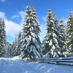Зима буває свіжа, сліпуча й запашна.