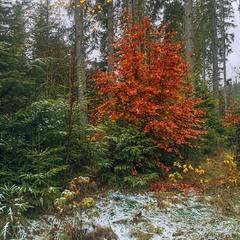 Несподівапна зустріч між осінню й зимою на узліссі в дощ після снігу трапилася оце.
