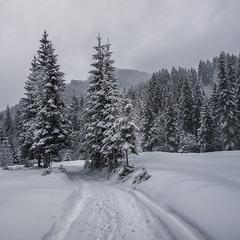 Сніг цілий день сипав і сипав. А ввечері відкрився портал до холодного пива.