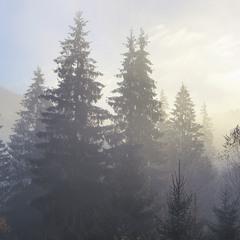 За туманом нічого не видно на світанку. А перед туманом - видно все (майже).
