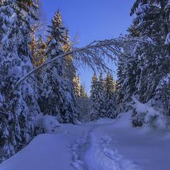 О снігу було понападало - в коліна. Та ми дійдемо. Бо відкіля ж ця світлина з'явилася б?