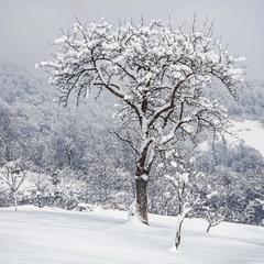 Зима з грушкою.
