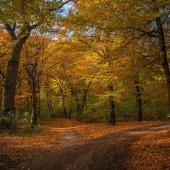 У осінь  дороги ведуть.