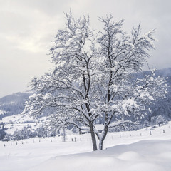 Падав сніг на поріг на краю села.