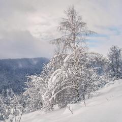 Падав сніг на поріг. І тут зненацька на небі заворушилося сонечко.