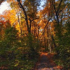Пікторіалізм чи не пікторіалізм, чи в лісі, чи на вулиці - або є, або нема.