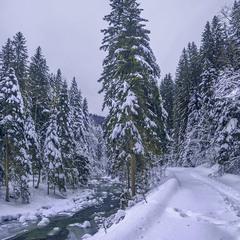 Небо - пусте й безбарвне. Зате під ногами порипує свіжий сніг.