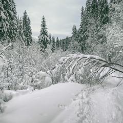 Снігова стежка до Петроса. Дуже хмарно було.
