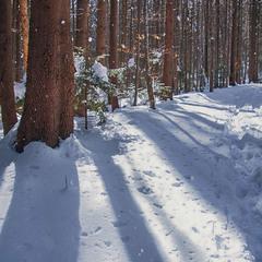 В дорозі на Хом'яка таке було: засіяло сонце, заблищав сніг так, що аж дерева засвітилися.