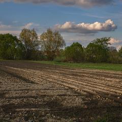 В полях край села сонце визирнуло. Оце, що під ногами - земля,  колись була на вагу золота.