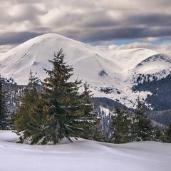 Велика Біла Гора  заховалася між хмарАми й деревами з червоними шишками.