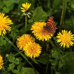 Цікаво було б поглянути на світ очима метелика, бджоли, або хоча б дитини.