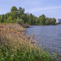 Вітер дмухнув понад озером в травні.