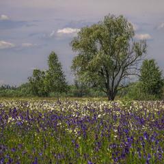 Луги весняно-літні, де б ви думали - в місті Києві. - Шукати треба вміти.
