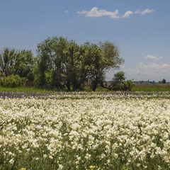 Сонце світить, трава, квіти проізростають, а хмарки - вже збираються потрошку.