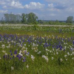 Цвітний кольоровий і барвистий луг стався в полях при стежці.