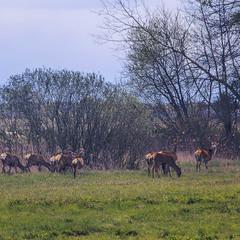Весна іде, траву несе, і в тій траві козулям - все: і білки, і жири, і вуглеводи, і амінокослоти.