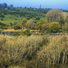 Радісні ранкові гаї на березі річки Буог в стані квітневої розпусти.