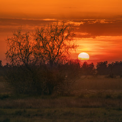 У полях край села сонце ховається ранньою весною.
