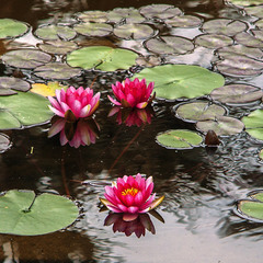 О - які гарні квіточки посеред води.