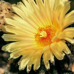 Квітку папороті оце побачив позавчора вночі (на Івана Купала). Хто знає - що мені тепер зробиться?