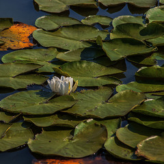 - І жабам сняться сни кольорові?