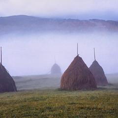 Осінь прийшла, сіно-солома - в копичках вже. Вранці тумани зворохоблюються все частіше.