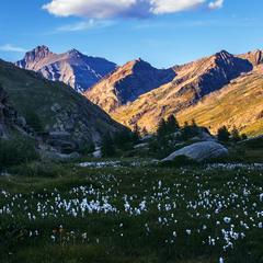 Сонця не видно вже - сховалося за хребет. Вечір, бавовна альпійська під ногами.