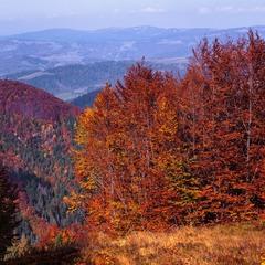 Боржавська осінь запалала.