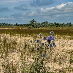 Сомотнє і  пустельне життя  на березі мор'я.  Далі - гаї з лоха. А на обрії - сосновий ліс.