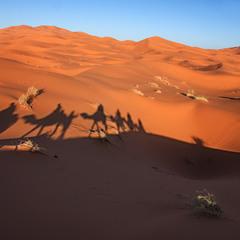 По пісках - так по пісках.