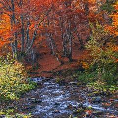 Різнобарвні ліси жовтневі на березі річки Невелички надовго закарбовуються в пам'яті.