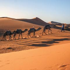 Юсуф і верблюди йдуть на ночівлю. Вечір пустельників.