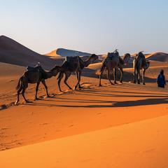По пустелі важко ходити. Та все ж, головне, чи знає поводир як йти. І куди - варто, а куди - ні.