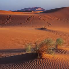 Глибокі тіні пролягають проти ночі від трави й піщаних гір. А верблюдам це - в радість. І мені.