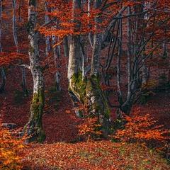 Сонце ховається й організовує невеличку заграву в лісі.