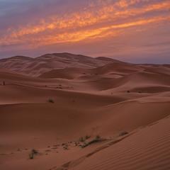 Світає, край неба палає, приємно живу істоту стрінуть в пісках.