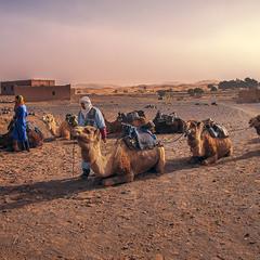 А зранку на Мерзуґу і на всю пустелю опустилася пильова буря: небо затяглося імлою до самого обрію.