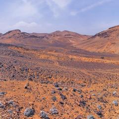 В це важко повірити, та у нас на Марсі вже зацвіли перші квіти, - еволюція, аданака.