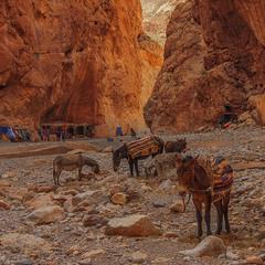 Посеред каменів життя минає буває на стежці. А буває - ще й на дні глибокої ущелини.