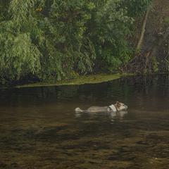 "Посеред українського степу, на берегах малесеньких річок водиться порода – ""особлива водоплавна"""