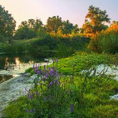 Гарний вечір біля води та ще й з квітами.