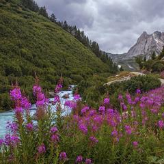 Квіти перед дощем особливо яскраві.
