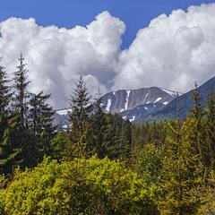 Гора ото - Ребра, гори - Карпати. А йдемо ми, коли настає кольорове літо, - у ті білі кучугури.