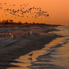 Самотня чайка може злітати у вирій із отими-о. Та не хоче.