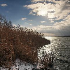 """Зима все ближче: над озером сталевим """"кружляють злії чайки"""""""