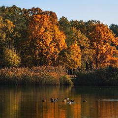На озері жовтень.