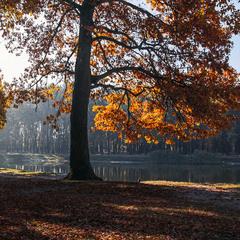 Жовтень і ранок були оце на березі озера.